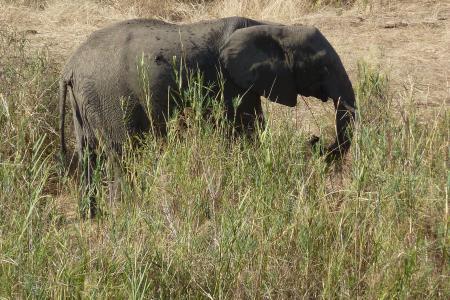 Koorreis Zuid-Afrika